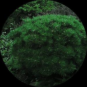 krzewy